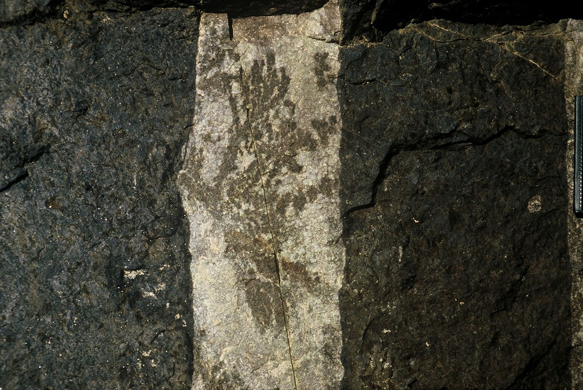 Dendritic Clinopyroxene Oikocrysts from the Dwarsrivier National Monument (contributed by Ken Lomberg)